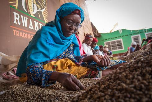 Rwanda coffee sorter reading glasses